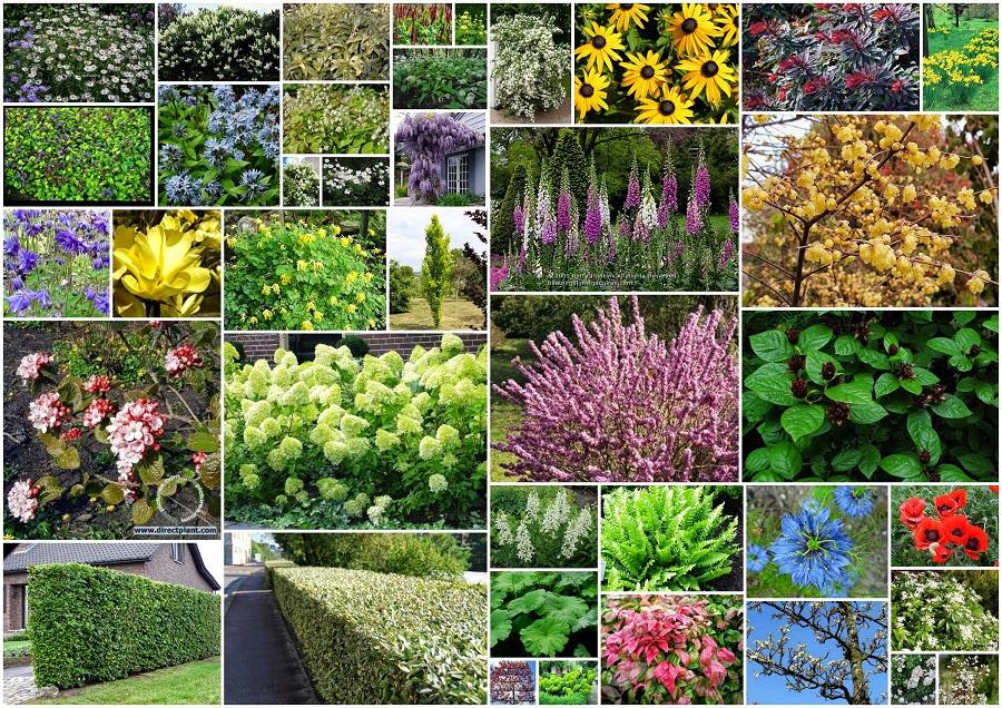 Oostpijl hoveniers jouw hoveniers voor tuinontwerp tuinaanleg